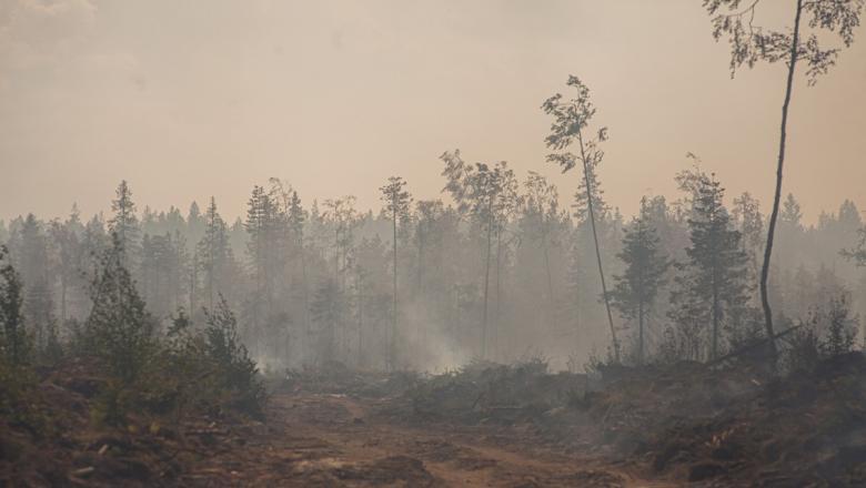 Площадь лесных пожаров в Карелии увеличилась